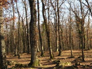 bosco in Toscana