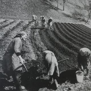 mestiere donna - piantatrici di patate - primi anni cinquanta