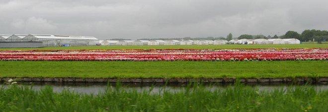 campi fiori e serre