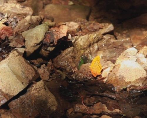 farfalla-su-acqua
