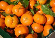 foto-clementine
