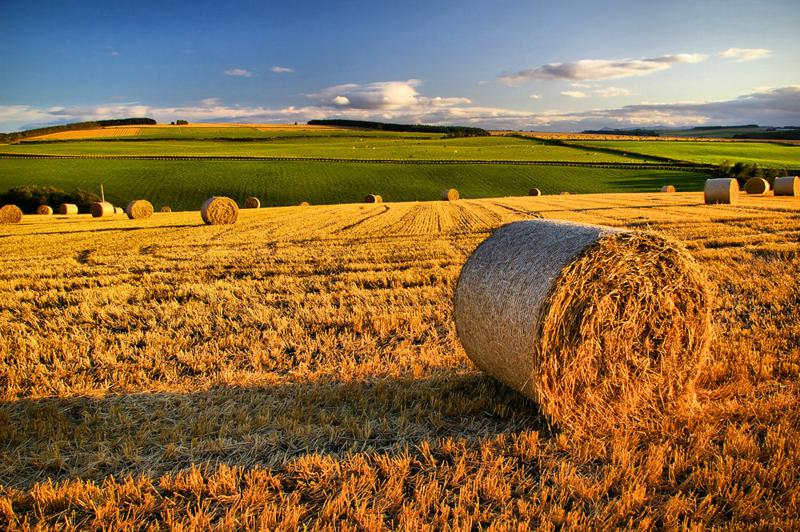 imprese-agricole